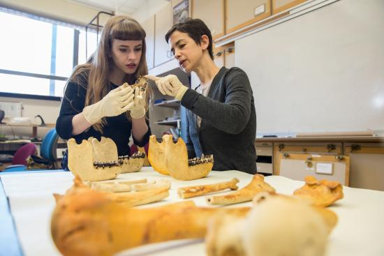 Student and faculty looking at gorilla bones